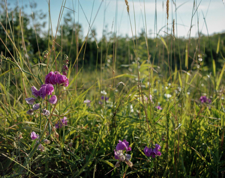 Film Photography Mamiya RZ67 Kodak Portra 160