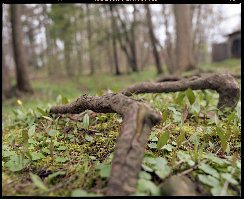 Kodak Ektar 100 Mamiya rz67 Medium format film Photography