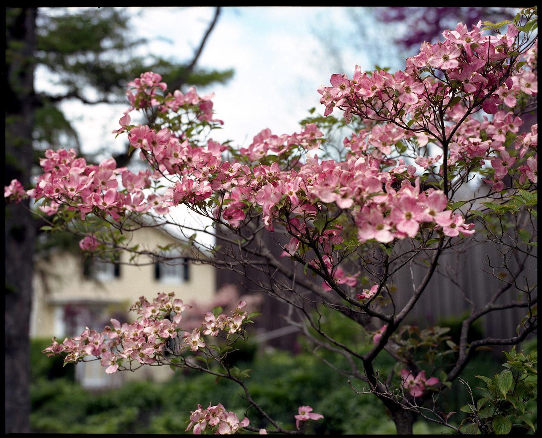 Kodak Portra 160 Medium Format Mamiya RZ67 film