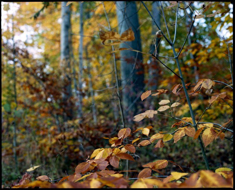 Mamiya RZ67 Kodak Portra 400 Medium Format film