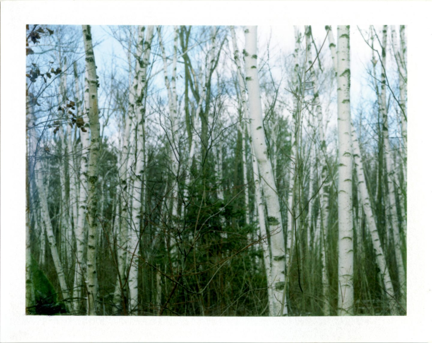 365-6 Crown Graphic 4×5 Fujifilm FP-100C